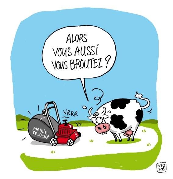 Blagounette du jour - Dessin vache humour ...